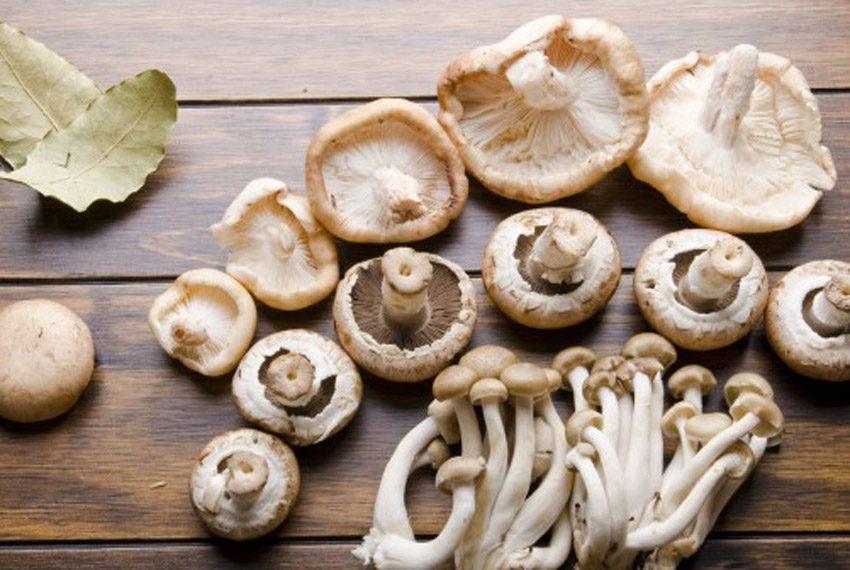 Os 5 principais tipos de cogumelos e seus benefícios - TOPVIEW