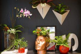 o Jardim Box combina plantas e arte