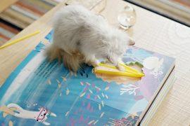 livroO Gato Mais Curioso do Mundo da Whiskas