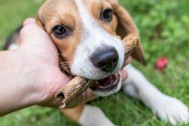 petiscossaudáveis para cachorros
