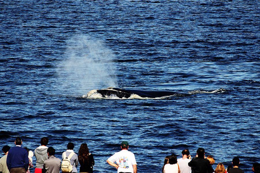 OLHA LÁ! Começou a temporada de baleias no Uruguai