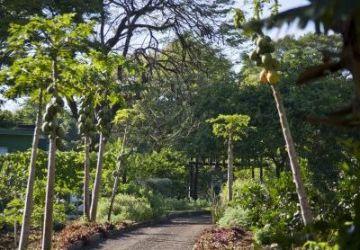 Bourbon-Cataratas_Lazer_Trilha-Ecologica_3-e1564669983157-360x250.jpg