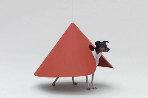 arquitetura para cães na Japan House São Paulo