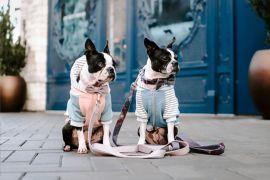 pets fashionistas